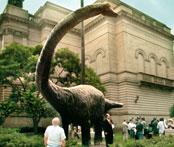 Photo ofa  life-size model of a Diplodocus carnegii poses outside the Carnegie Museums complex in Pittsburgh.
