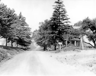 Image of a tree lined rural road  in front of Trinity Lutheran Church looking north on Brandt School Road in what was was then Franklin Township, Allegheny County