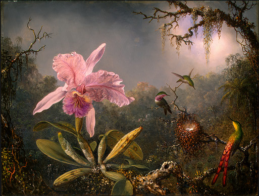 Lichen covers dead branches; moss drips from trees; and, a blue-gray mist veils the distant jungle. An opulent pink orchid with light-green stems and pods dominates the left foreground. To the right, perched near a nest on a branch, are a Sappho Comet, green with a yellow throat and brilliant red tail feathers, and two green-and-pink Brazilian Amethysts.