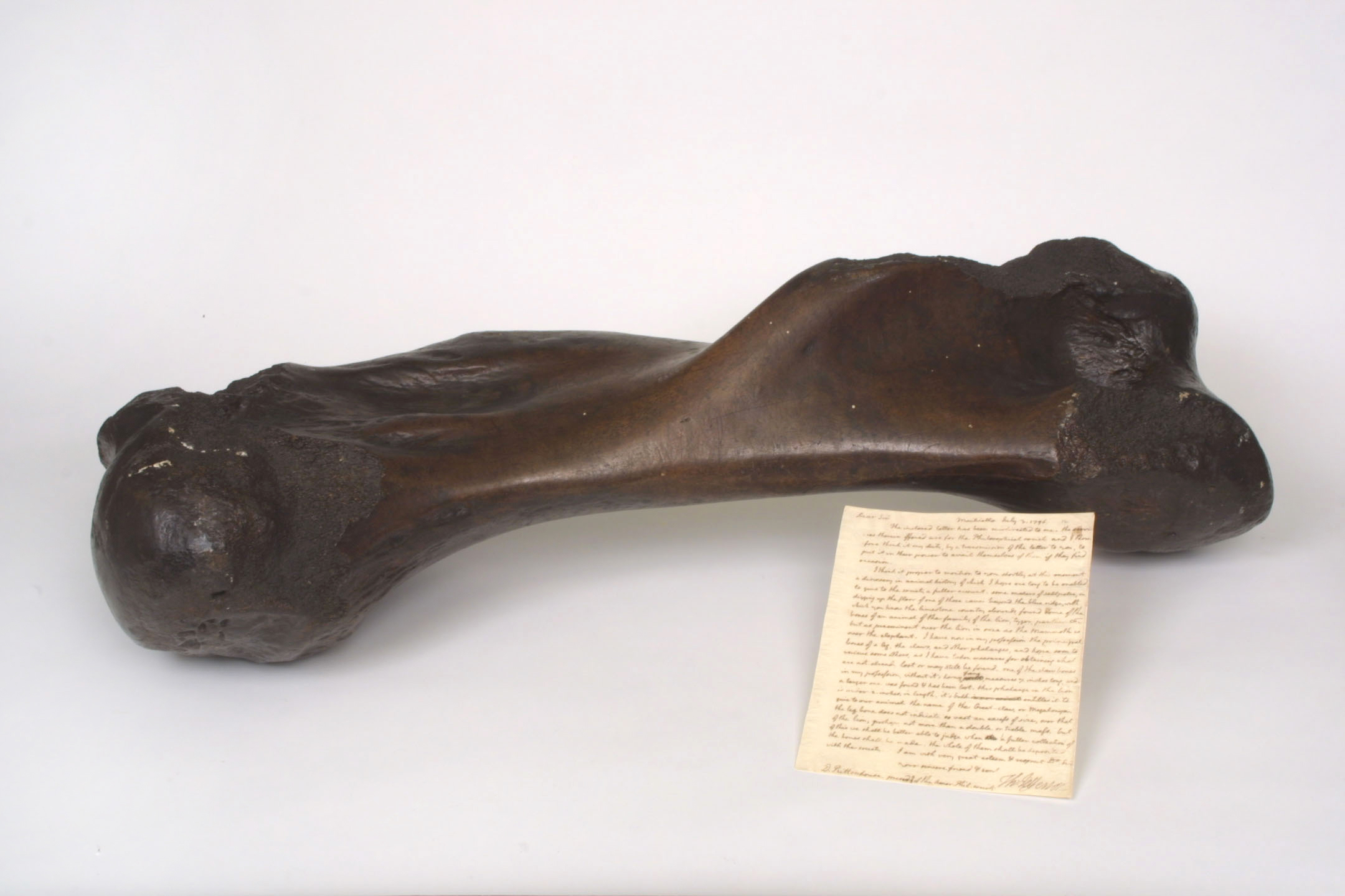In the 1790s Wistar, one of the nation's great medical anatomists, had become fascinated with the ancient bones of exotic species. At the White House, to which he had been invited by President Thomas Jefferson, Wistar examined the bones of a mastodon that George Rogers Clark unearthed in 1807 at Bone Lick, Kentucky. Wistar then wrote the detailed description pictured next to the bone.