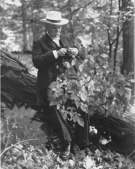 A man looks at a plant in the woods