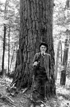 An elderly man with a long white beard is standing next a large tree trunk.